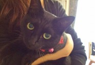 「英国パラソル奇談シリーズ」の吸血鬼のソファで寝る猫