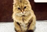病院嫌いな猫がとる行動3パターン