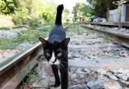 線路をまっすぐ進むネコ | 世界のニャ窓から file #8