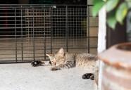 柵の外で寝るネコ | 世界のニャ窓から file #6