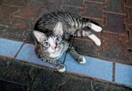 ネコ、ブルーアイズ | 世界のニャ窓から file #7