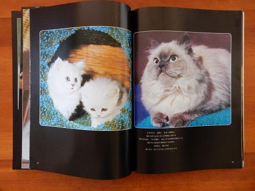 「猫」写真2