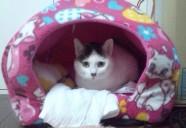 「猫ハカセ」への近道?!動物看護師のあれこれ