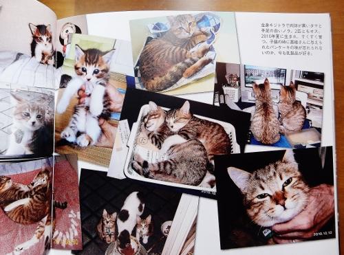写真6「猫1」 (500x371)