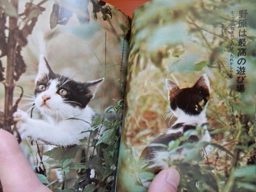昭和猫2冊5 (500x375)