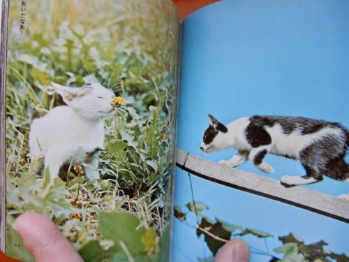昭和猫2冊6 (500x375)