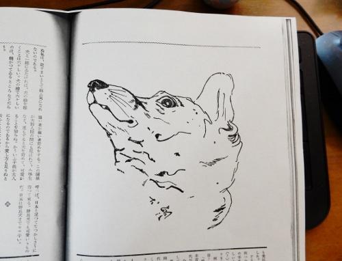 犬の研究2 (500x382)