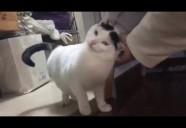 人間を全く信用せず、臆病な性格から猫社会にも入れなかった彼が、心を開く瞬間