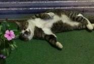 沖縄には猫