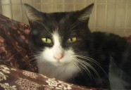 謎の多い動機 猫という現象  - マンション騒動記② -