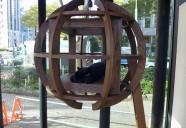 猫との住環境: 楽しく健康に暮らすことを獣医師と考えてみた