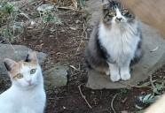 春夏秋冬猫桜