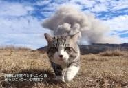 目と耳で楽しむ「ニャン吉写真展×猫の音楽会」