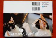 「ちょっかいを出す」の由来は、あの「猫手のしぐさ」…!