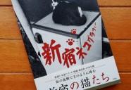 街を撮っていたら、いつもそこに猫がいた。『新宿ネコグラフィー』