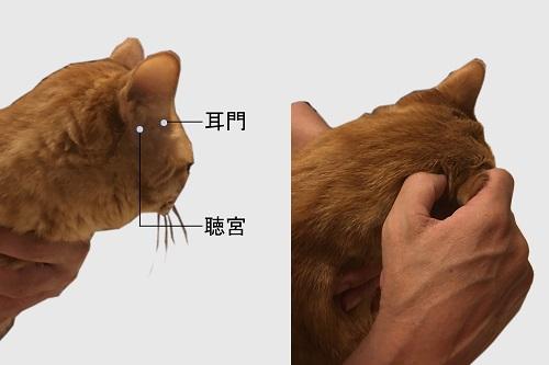 photo_04_お耳のマッサージ~耳門と聴宮