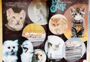 検証!? 昭和の猫ブーム