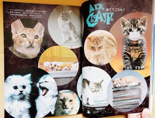 ネコとその仲間(猫CM1) (500x381)
