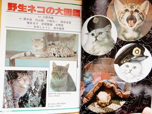 ネコとその仲間(猫CM2) (500x375)