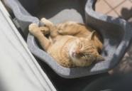 外猫の写真を投稿するときの気遣い「#僕らの居場所は言わにゃいで」