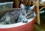 クララに会いたい 猫という現象  - マンション騒動記⑤ -