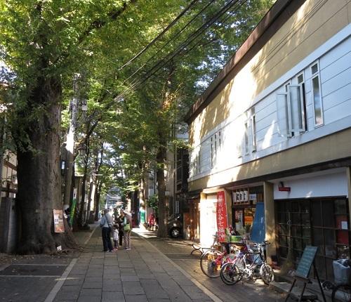 ケヤキ並木が美しい鬼子母神参道。