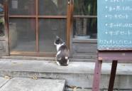 雑司が谷、喫茶店に入りたい 東京猫町散歩 師匠編07