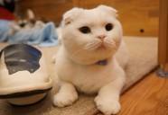 大阪に移転後、魅力が開花した「Nekocafe Cattail」