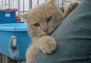 マムシと縁側ネコのリアルバトル! 可愛いだけじゃニャーイ!のよ、縁側ネコはねっ
