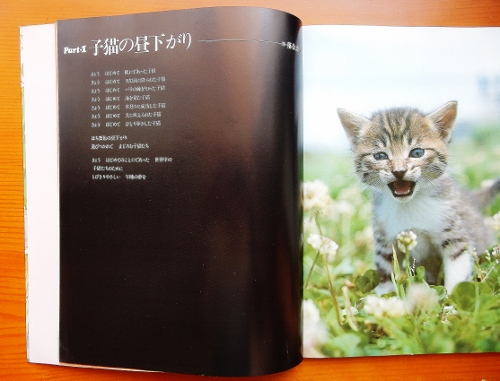 子猫の昼下がり写真 (500x381)