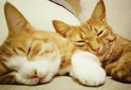 実は嫉妬深い!猫がヤキモチを妬いた時の6つの行動~後編~