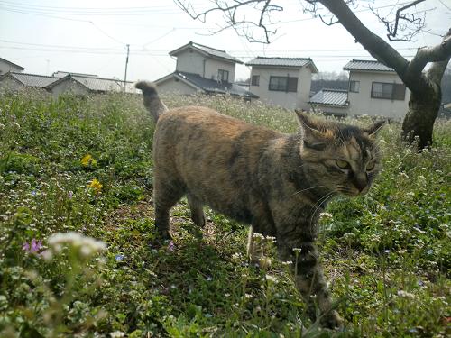 縁側ネコ2
