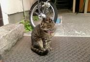 新たな敵? 猫という現象  - マンション騒動記⑥ -