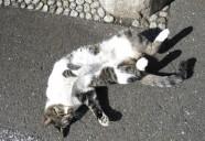 護国寺、猫に門番? 東京猫町散歩 師匠編08