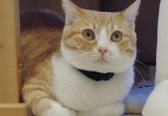 広島県内では希少な猫と触れ合うことのできる、猫カフェバロン
