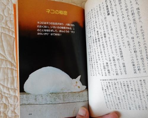 ネコの秘密 (500x401)