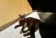 猫と夕焼け 猫という現象  - マンション騒動記⑦ -