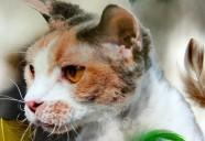 猫も自殺する…?ニャンとも不思議なネコの生態