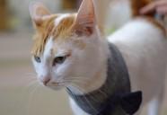 猫と人、それぞれの幸せを願う場所―保護猫カフェもりねこ