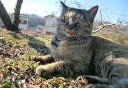 縁側ネコの系譜の巻(街編) 可愛いだけじゃニャーイ!のよ、縁側ネコはねっ
