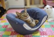 猫の寝る場所で猫の気持ちが分るかも?猫が好む寝床とは