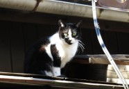 雑司が谷 屋根の上の黒白 東京猫町散歩 師匠編09