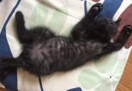 黒猫のハッチ