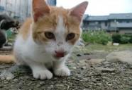 モフ、ミカンにマネされるっ 可愛いだけじゃニャーイ!のよ、縁側ネコはねっ