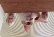 猫マッサージでオイルは使わない—ねこにメディカルアロマ03