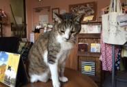 保護猫カフェ もりねこのおばあちゃん猫:しずかちゃん