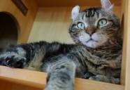 大猫なのにカールスが隠れ家に籠るワケ