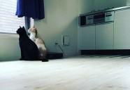 猫と暮らせる賃貸住宅・・猫が楽しく遊ぶ仕掛け