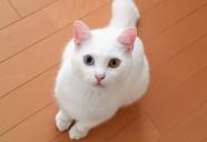猫はお家が大好き★ ~猫のお留守番をサポートするキャットシッターをご存知ですか?