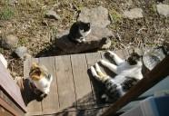 知ってる?!縁側ネコ農法って!おおーーっと なんと!東京で発表!!! 可愛いだけじゃニャーイ!のよ、縁側ネコはねっ